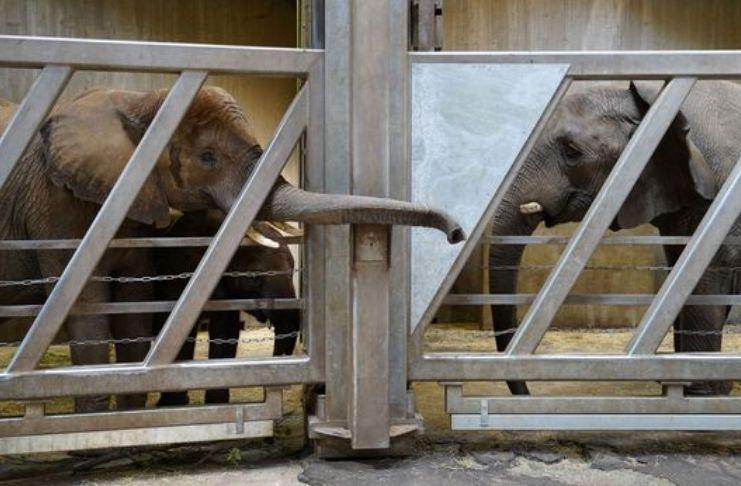 Família de elefantes se reune após 12 anos separada