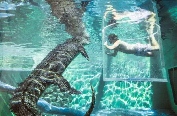 Atração australiana permite que os visitantes se encontrem frente a frente com crocodilos