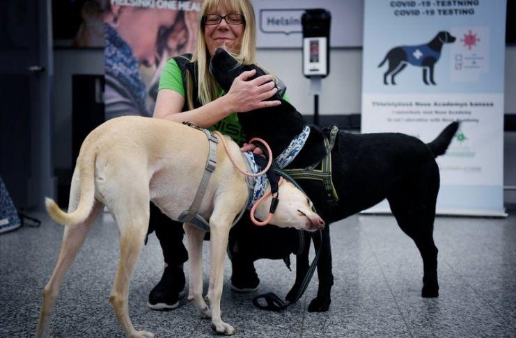 Finlândia coloca cães farejadores de coronavírus no aeroporto
